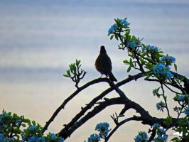 Flowered Robin Against Sea by wolfwings1
