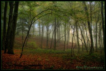 Enchanted Forest by allym007