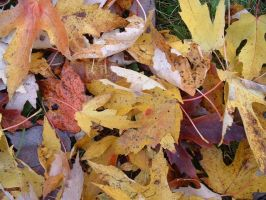 Fall leaves by pshope