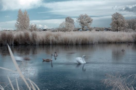 Turn Loose The Swans by Anntylus