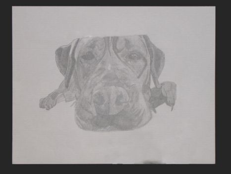 Dexter in pencil by vanessow