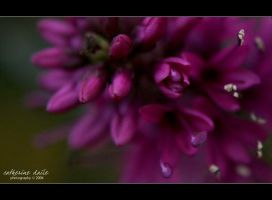 passion iii.. by cdaile