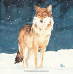 Lonely wolf by ChristinaMandy