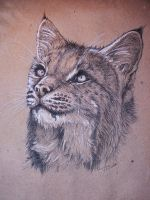 Bobcat by Concini