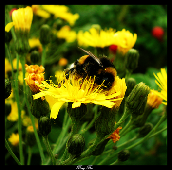 Busy Bee by yunchen