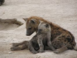 hyena family by sinekotdiabl