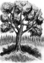Maple Tree Charcoal Drawing by LoVeras
