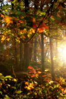 Fall Sunrise by InLightImagery