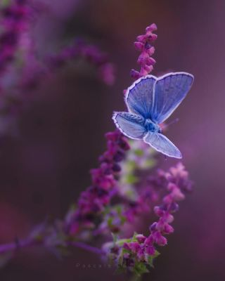 .Butterfly. by fruitpunch1