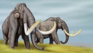 Steppe Mammoths by DiBgd