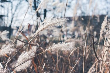 When the cold wind blows by Hazel-Photography