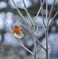 The Birds of Winter by AndyPK