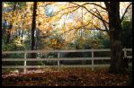fall scene I by Foozma73