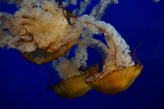 jellyfish 2 by mycreed9004