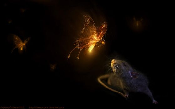 Firefly wallpaper by DianePhotos