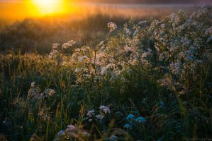 Mill Meadow Sunrise by Mincingyoda