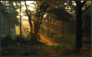 Waking up the morning forest by jchanders