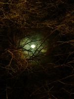 Moon : Forest by Sventine