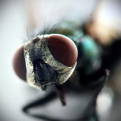 Mosca by RobbyP