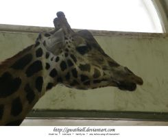 Zoo - Giraffe profile by Gwathiell