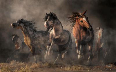 American Paint Horses by deskridge
