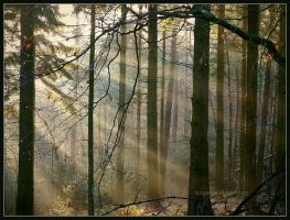 enchanted forest by Ingelore