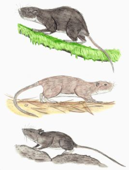 Prehistoric Canaries: Rodents by DiegoOA