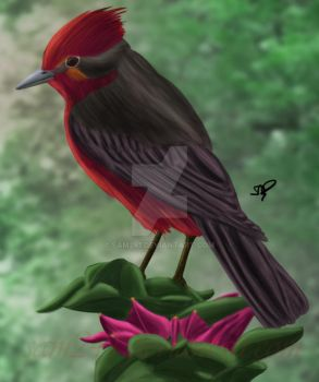 Vermillion Flycatcher by sam241