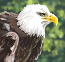 Bald Eagle - Green by MissMondayMorning