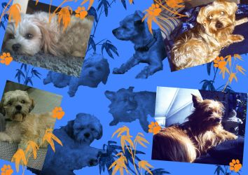 Photo Collage - DOGS by JB-Pawstep