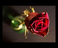 one rose left 02 by chineserocker55