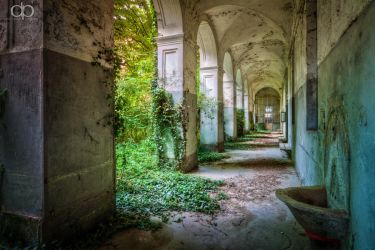 Green fingers of ivy by Dapicture