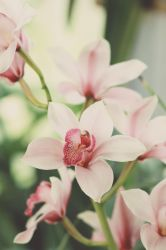 Orchids by sayra