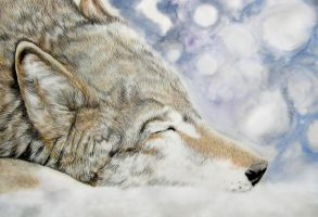Wolf's Rain Hige by ZhaoT