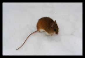 Mouse by Cavin
