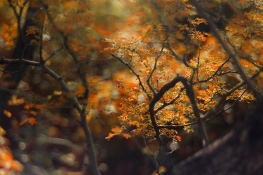 Shades of Fall by MH-Photoworks
