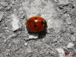 Lady Bug by Eternalinpeace