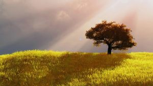 Lonely Tree by drake10k