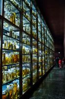 Berin Museum: Room of Grotesque by Roydz