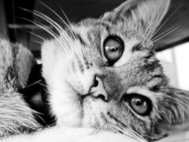 Kitty in Black and White by black-sway