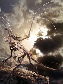 Dragon skeleton by Ahyicodae