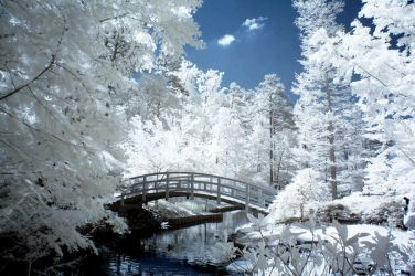 Duke Gardens IR V by LDFranklin