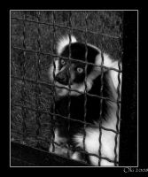 Behind the bars by Oki666
