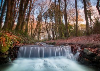 Tehidy Landscape by StephiPhotography