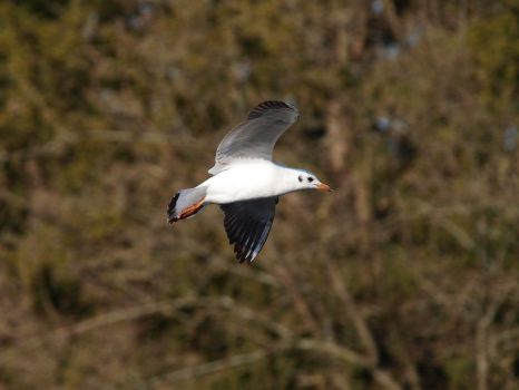 March 4th, Seagull by Taliesin-Neonblack