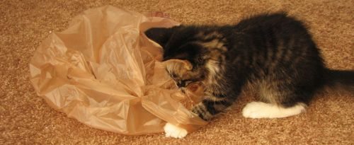 Stormy Attacks A Bag by martypunker