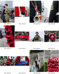 Poppy Appeal Contact Sheet by newcastlemhull