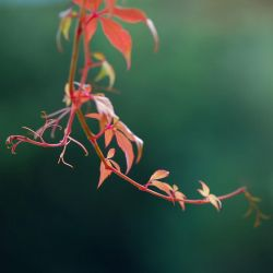 colours of autumn I by Wilithin
