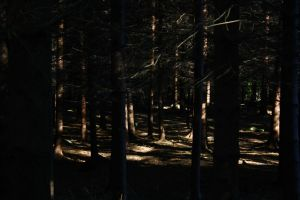 Dark Forest I by LoveForDetails