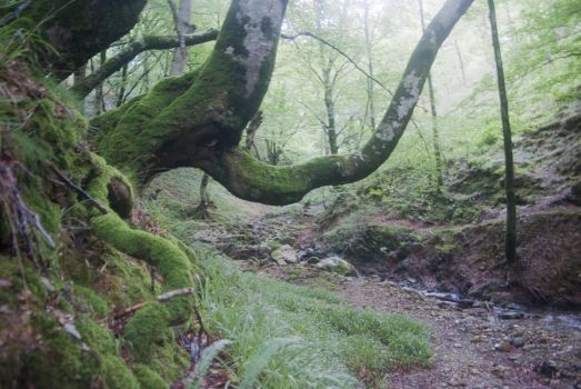 Pyrenees Trees by Anupthra